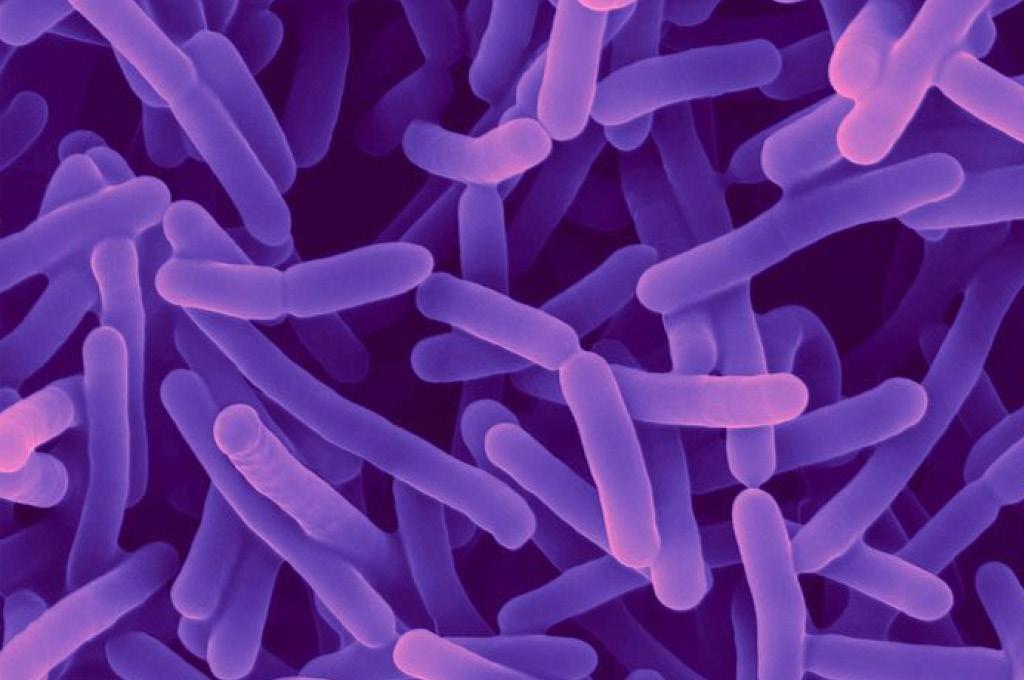 микробиома кожи головы