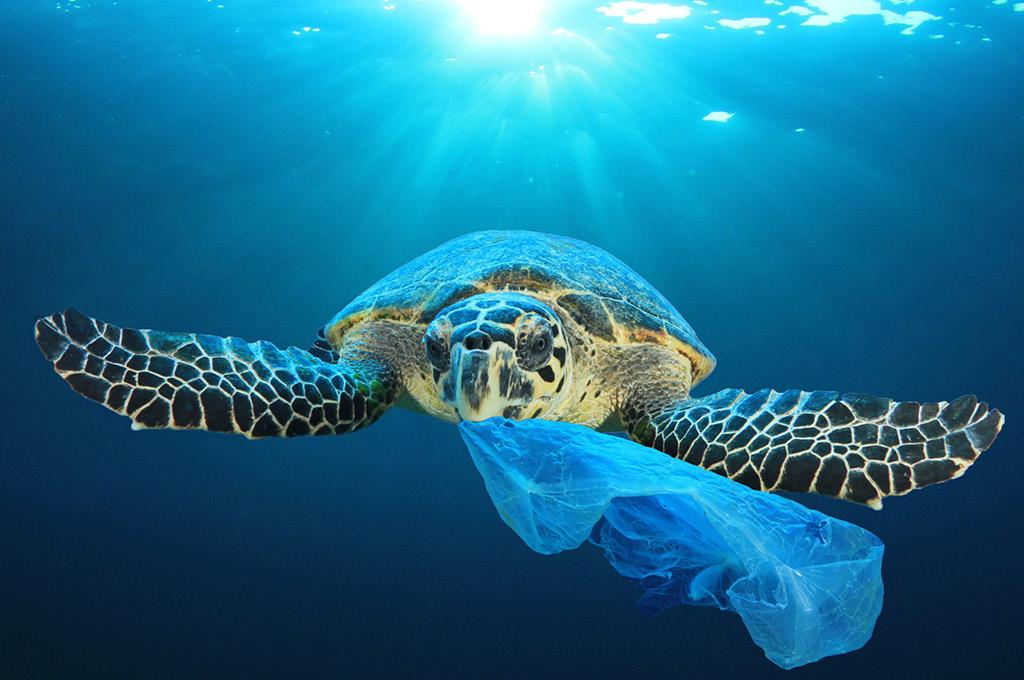 пакеты винят в массовой гибели морских черепах