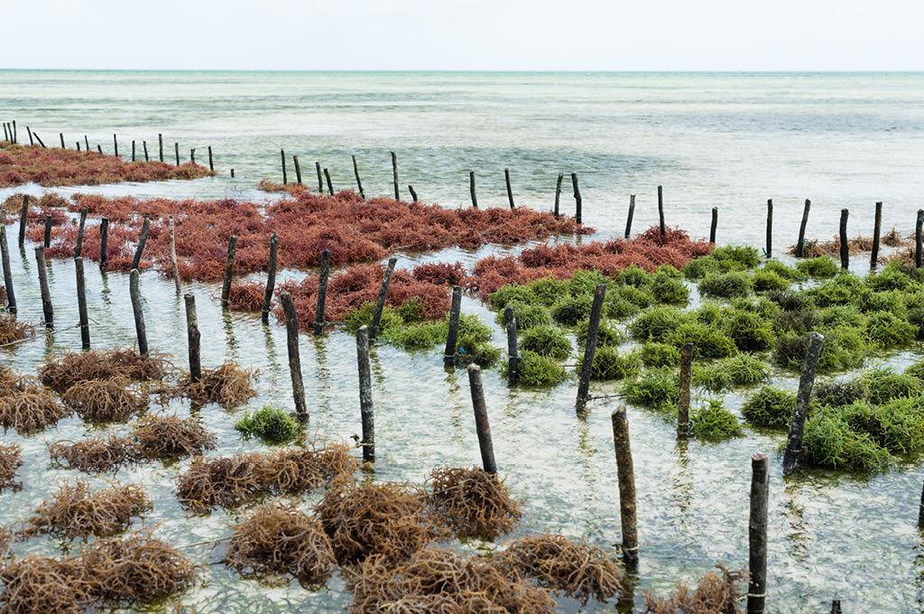 Производство водорослей