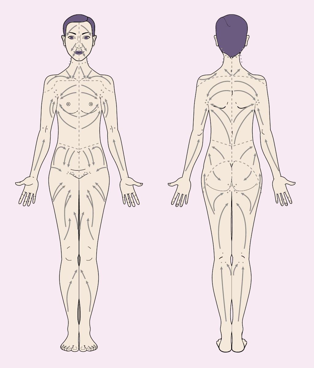 Лимфодренажный массаж выполняют по направлениям